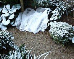 リュウノヒゲも 雪の下
