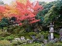 京都 霊鑑寺の紅葉