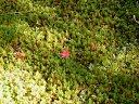 紅葉の足元の苔
