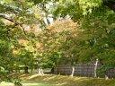 桂離宮 前庭の紅葉