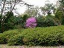 大阪市大植物園