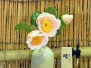 淡桃色 一重 椀咲き 筒しべ 大輪