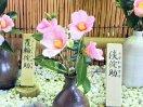 桃色 一重 筒咲き 侘芯 小輪