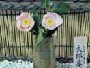 淡桃色 一重 抱え〜筒咲き 筒しべ 中輪