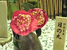 濃紅色 一重 平開咲き 花糸は紅色 梅芯 小〜中輪