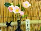 淡桃色 一重 ラッパ咲き 弁先中折れ 中輪