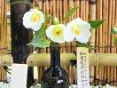 白色 一重 筒〜ラッパ咲き 枝垂れ性 小輪