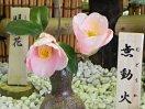 淡桃色 一重 筒咲き 中輪
