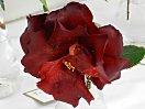 黒紅色 光沢のある花弁 八重咲き 大輪