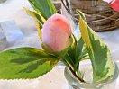 淡桃紅色地 薄紅色のぼかし 一重 筒咲き 筒しべ 中輪
