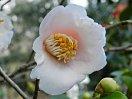 桃色 八重咲き 小輪