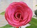 赤色 半八重〜牡丹咲き 極大輪